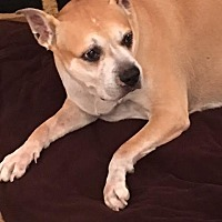 Adopt A Pet :: Alexi formerly Lexie - Las Vegas, NV