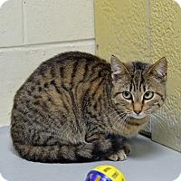 Adopt A Pet :: 10310063 - Brooksville, FL