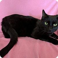 Adopt A Pet :: Leslie - Toledo, OH