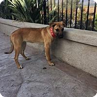 Adopt A Pet :: Freda - Irvine, CA