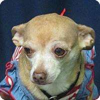 Adopt A Pet :: Buffy - LaGrange, KY