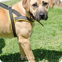 Adopt A Pet :: Custard - Greenwood, SC