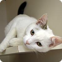 Adopt A Pet :: Benjamin - Richmond, VA