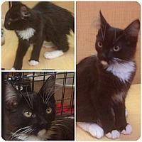 Adopt A Pet :: Kirby - Modesto, CA