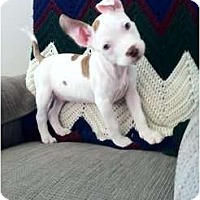 Adopt A Pet :: Lincoln - Arlington, TX
