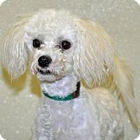Adopt A Pet :: Baxter - Port Washington, NY