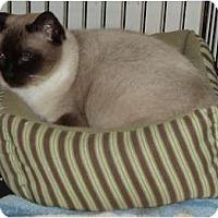 Adopt A Pet :: Sulig - Westfield, MA