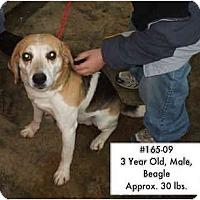 Adopt A Pet :: # 165-09 @ Animal Shelter - Zanesville, OH