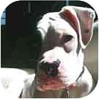Adopt A Pet :: Margot - Sunderland, MA