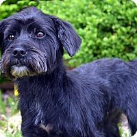 Adopt A Pet :: Georgia - Bridgeton, MO