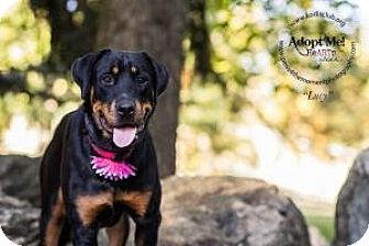 Rottweiler Dog for adoption in Essington, Pennsylvania - Lucy
