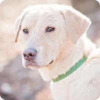 Adopt A Pet :: Sunni - Lewisville, IN
