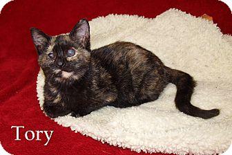 Domestic Shorthair Kitten for adoption in Jackson, Mississippi - Tory