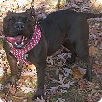 Adopt A Pet :: Tabatha - Voorhees, NJ
