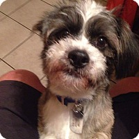 Adopt A Pet :: Gizmo - Jacksonville, FL