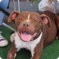 Adopt A Pet :: Tilly - Yuba City, CA
