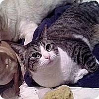Adopt A Pet :: Mona - Palmdale, CA
