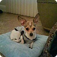 Adopt A Pet :: Fiori - Rescue, CA