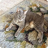 Adopt A Pet :: Cleo - Laguna Woods, CA