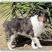 Adopt A Pet :: Jazmin - Trabuco Canyon, CA