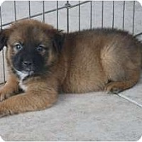 Adopt A Pet :: Roscoe - Minneola, FL