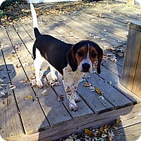 Adopt A Pet :: Jellybean - Indianapolis, IN