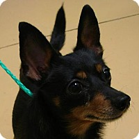 Adopt A Pet :: Raven - Erwin, TN