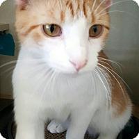 Adopt A Pet :: Donny - Lyons, IL