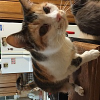 Adopt A Pet :: Cleo - Buchanan, TN