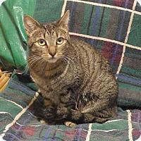 Adopt A Pet :: Emma - Quail Valley, CA
