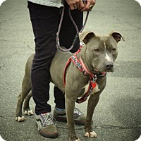 Adopt A Pet :: Rosa - Durham, NC