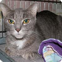 Adopt A Pet :: Daisy - New Kensington, PA