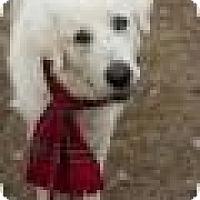 Adopt A Pet :: Walter - New Boston, NH