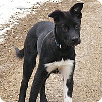 Adopt A Pet :: Storm - Rigaud, QC
