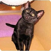 Adopt A Pet :: Pvt Benjamin - Colmar, PA