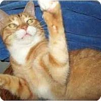 Adopt A Pet :: HEATHCLIFF - Little Neck, NY