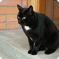 Adopt A Pet :: Zuri - Cookeville, TN