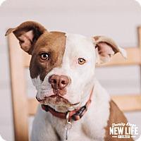Adopt A Pet :: Muneca - Portland, OR