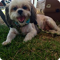 Adopt A Pet :: Ollie - Rancho Cucamonga, CA
