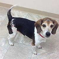 Adopt A Pet :: Biggun - Urbana, OH