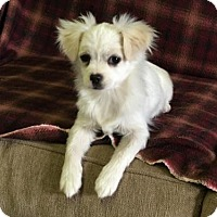 Adopt A Pet :: 'ANNIE' - Agoura Hills, CA