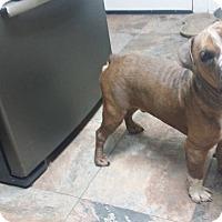 Adopt A Pet :: Chunk - Rosenberg, TX