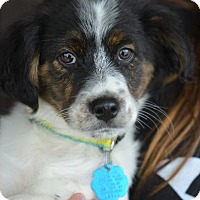 Adopt A Pet :: Buddy - Danbury, CT