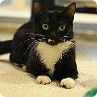 Adopt A Pet :: Lemmi - Aiken, SC