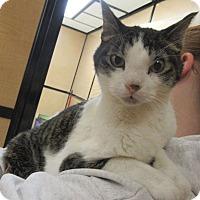 Adopt A Pet :: Finnegan - Rochester, MN