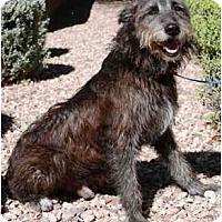 Adopt A Pet :: Fletch - Gilbert, AZ