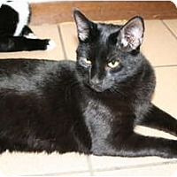 Adopt A Pet :: Piccolo - Naples, FL