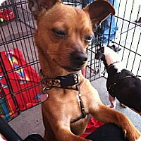 Adopt A Pet :: Oliver - North Hollywood, CA