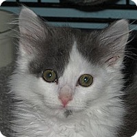 Adopt A Pet :: Misty - Richfield, OH
