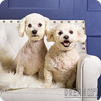 Adopt A Pet :: Cheesecake and Gracie - Owensboro, KY